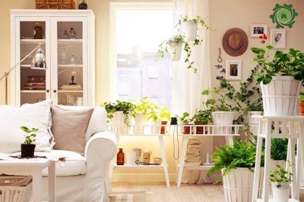 Cách lựa các loại cây trồng trong nhà theo phong thủy
