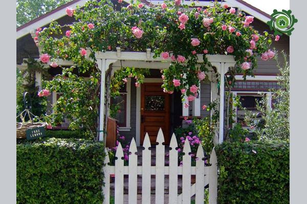 Giàn hoa hồng leo trang trí sân vườn