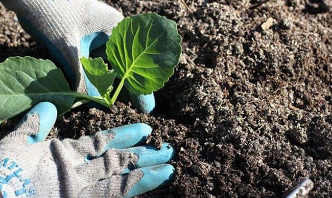 Lợi ích cách xử lý đất trước khi trồng rau