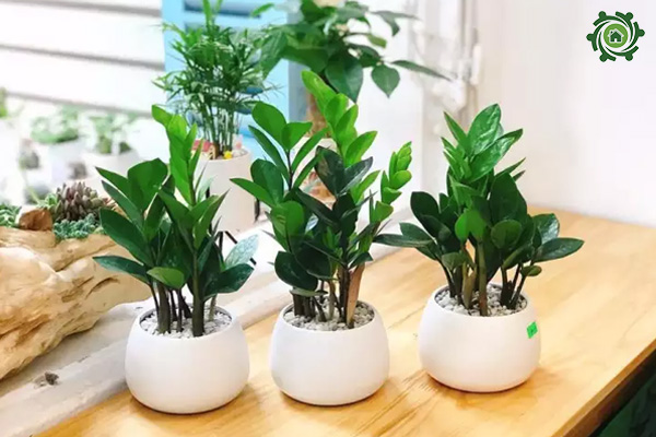 mẫu cây cảnh mini để bàn
