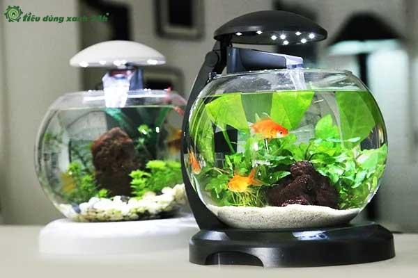 Trang trí phòng làm việc công sở bằng bể cá mini