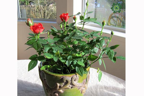 trồng cây phong thủy trong nhà theo tuổi-8