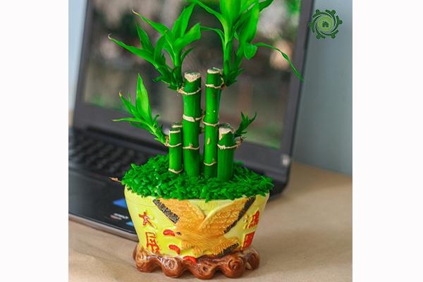trồng cây phong thủy trong nhà theo tuổi-7