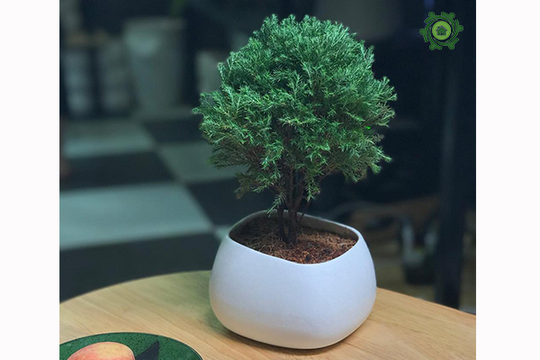 trồng cây phong thủy trong nhà theo tuổi-12
