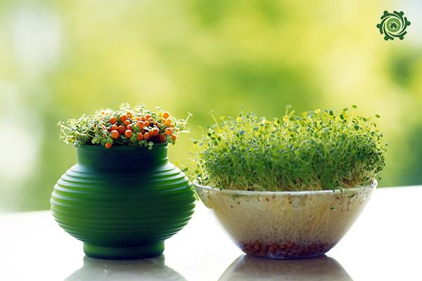 trồng cây phong thủy trong nhà theo tuổi-32