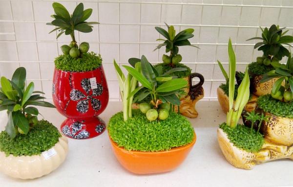 TOP 5 mẫu cây cảnh mini để bàn may mắn giá rẻ