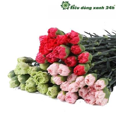 Hạt giống hoa cẩm chướng kép - HG04 (30 hạt )