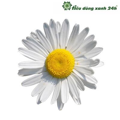 Hạt giống hoa cúc mini - HG01 (100 hạt)