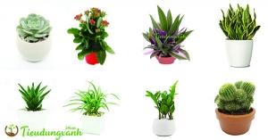 Các loại cây cảnh dễ trồng cho người ít thời gian chăm sóc