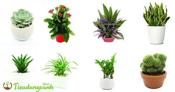 Top 10 các loại cây cảnh dễ trồng dễ chăm sóc bạn nên trồng