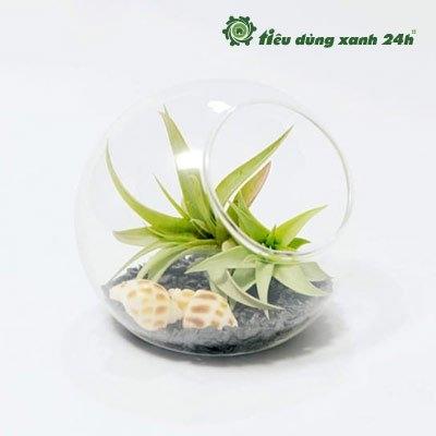 Tiểu cảnh mini - C07