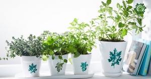 Top mẫu trồng cây phong thủy trong nhà theo tuổi - 12 con giáp